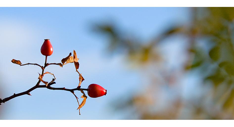 """""""Herbstliebe"""""""