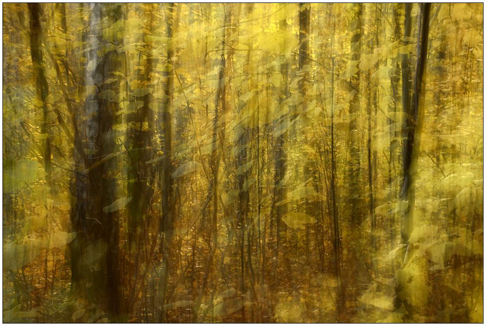 Herbstmalerei (2)
