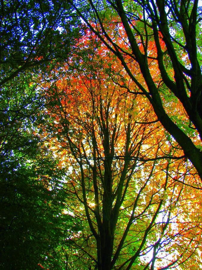 Herbstmalerei von K.Becker
