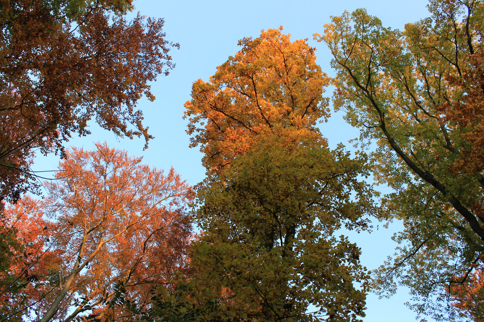 Herbstmalerei2