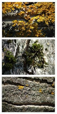 Herbstmantel