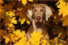Herbstmaraner ;-)
