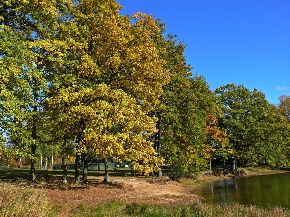 Herbstmemory
