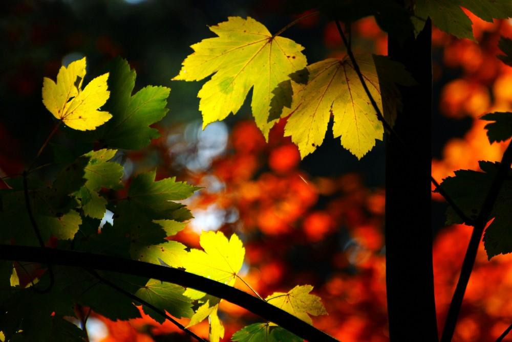 Herbstmoment