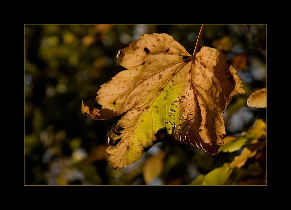 Herbstmomentchen