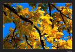 Herbstmomente 34
