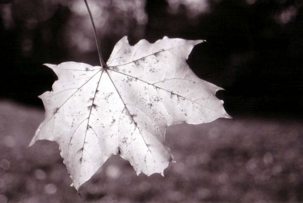 herbstmomente(new)