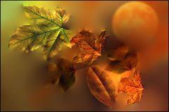 Herbst.Mond...