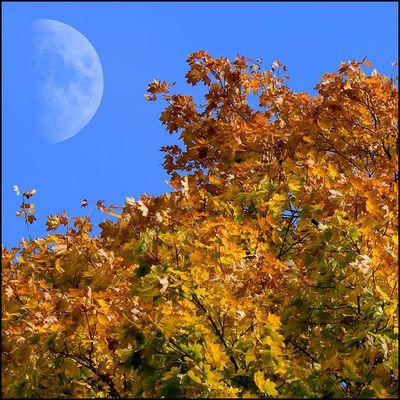 Herbstmond