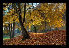 Herbstmorgen - 11