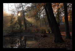 Herbstmorgen - 5