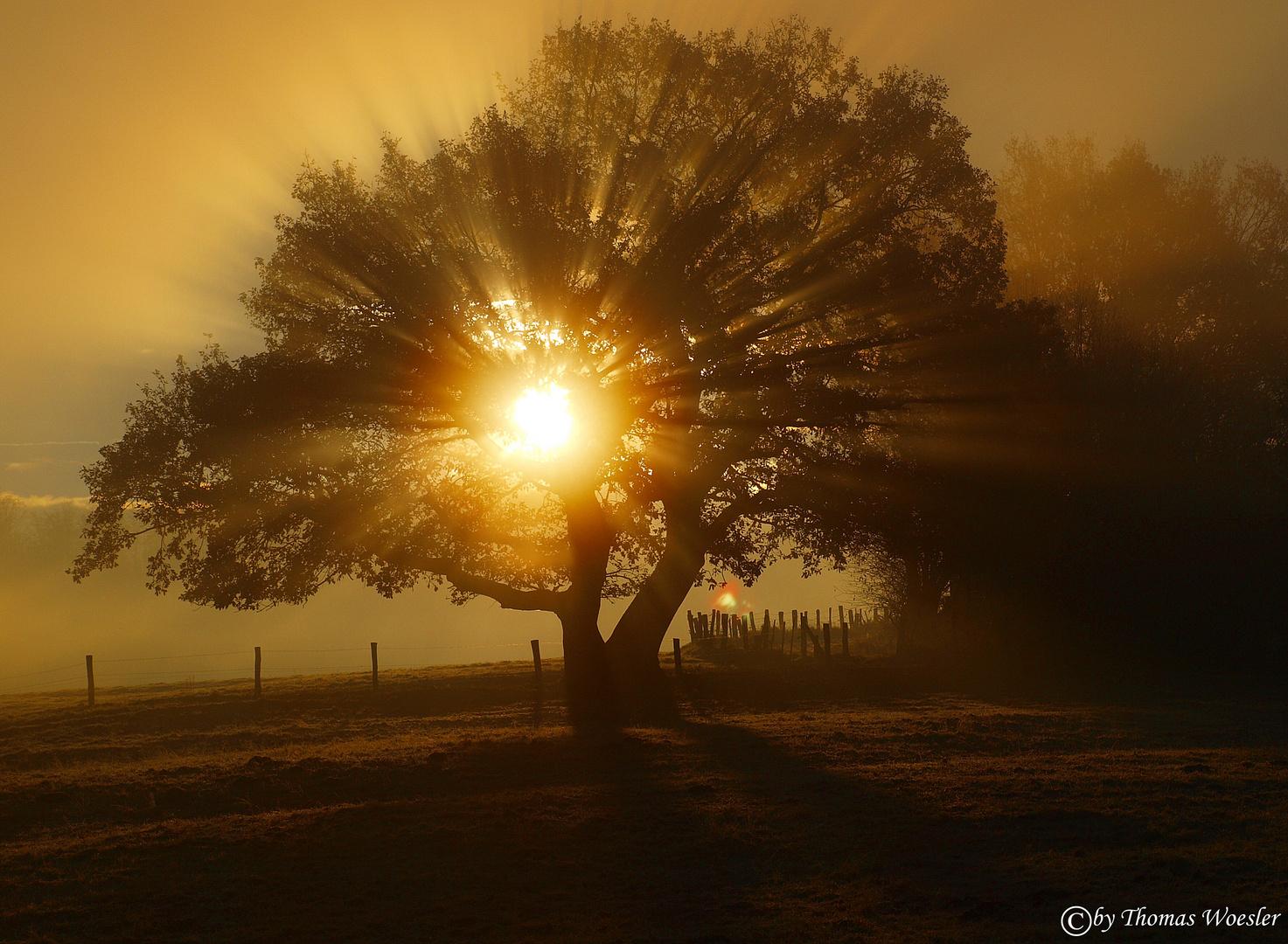 Herbstmorgen !