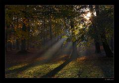 Herbstmorgen - 8