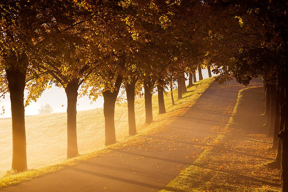 Herbstmorgen ....