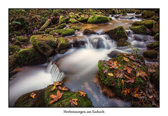 Herbstmorgen am Sasbach