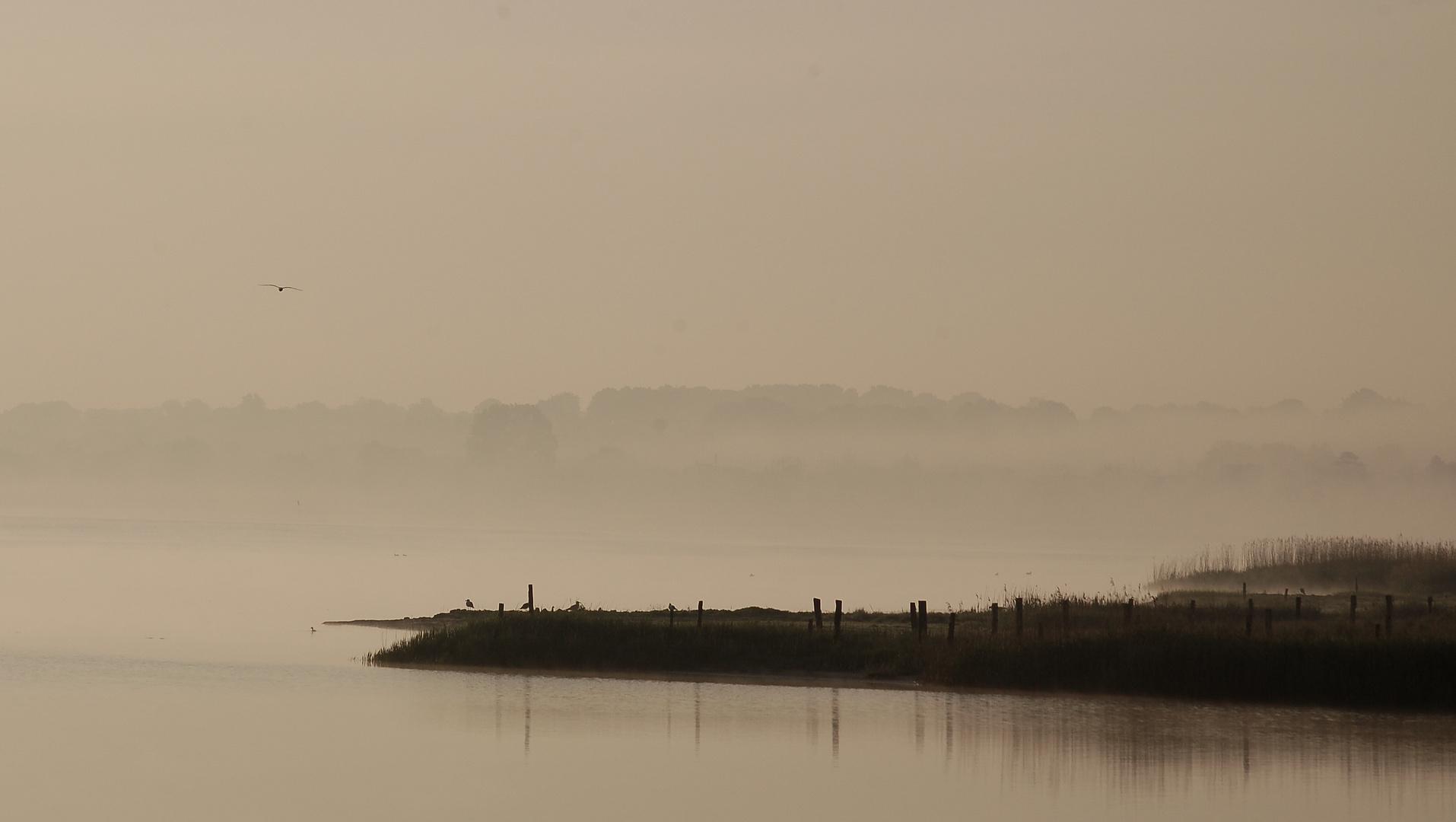 Herbstmorgen an der Schlei