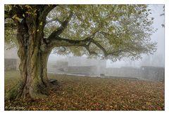 - Herbstmorgen auf der Hohenburg -