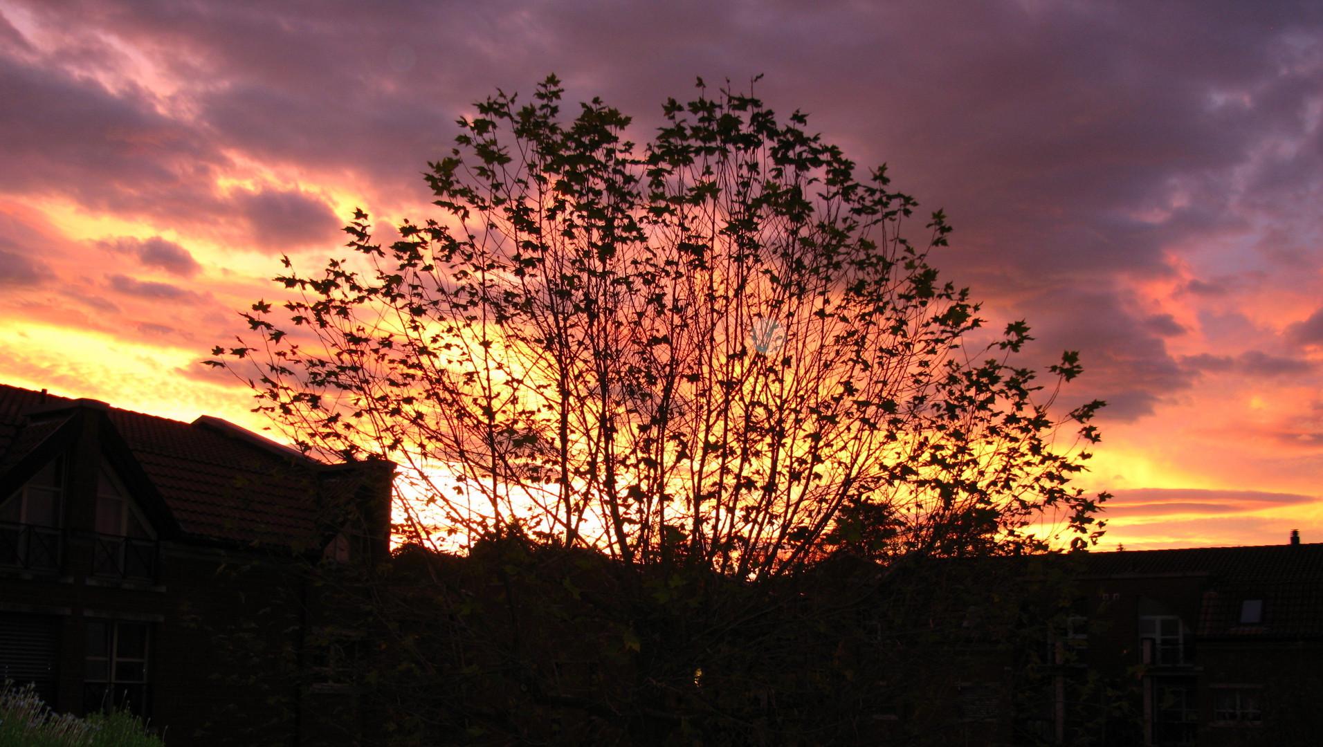 Herbstmorgen, der Himmel brennt!