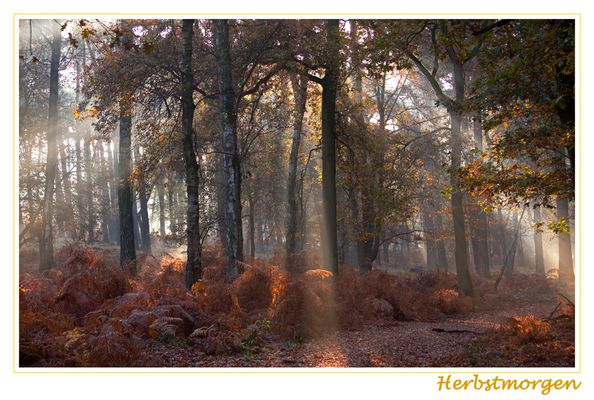 Herbstmorgen III