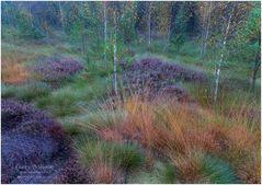 Herbstmorgen im Moor