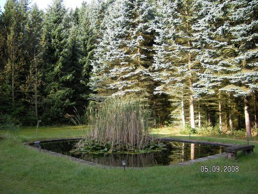 Herbstmorgen im Wald bei Bad Bevensen