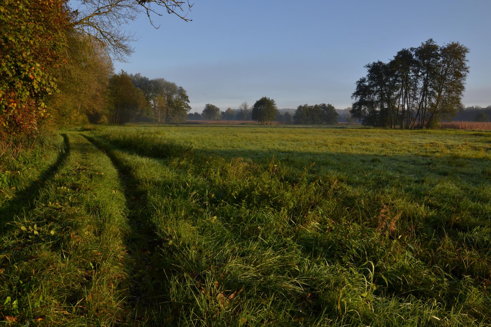 Herbstmorgen im Wiesengrund 2