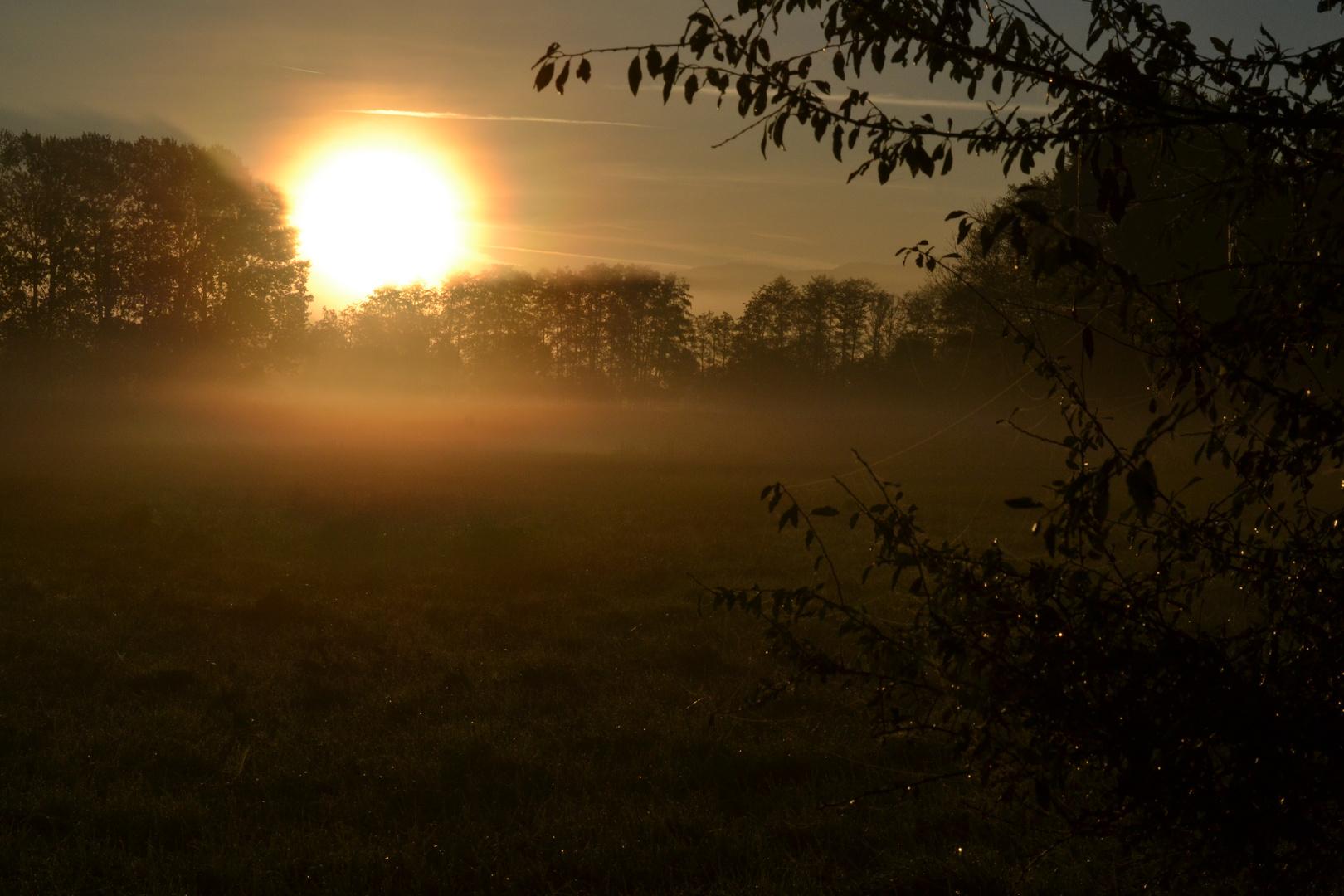 Herbstmorgen im Wiesengrund