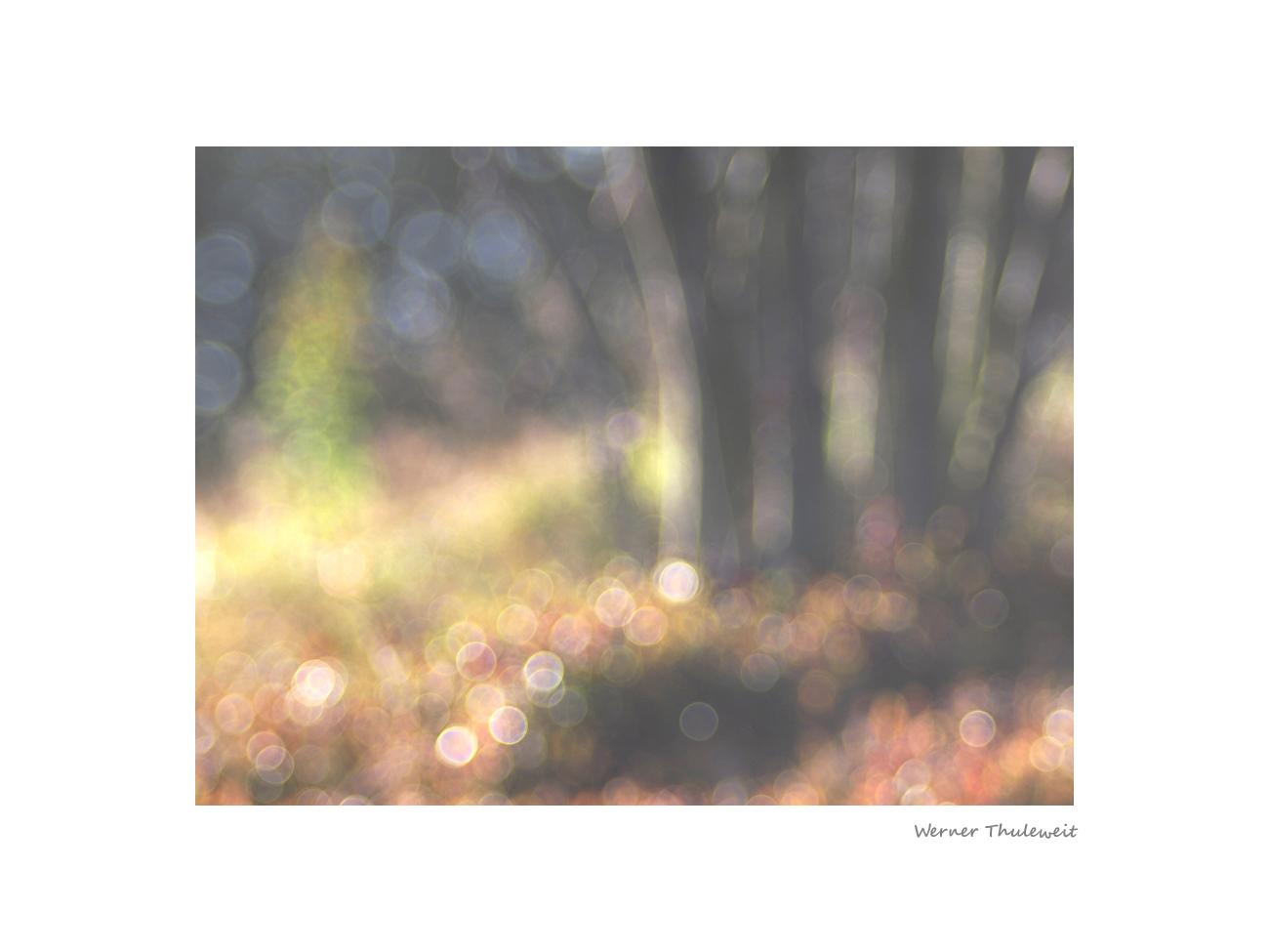 Herbstmorgenimpression am Knüllköpfchen