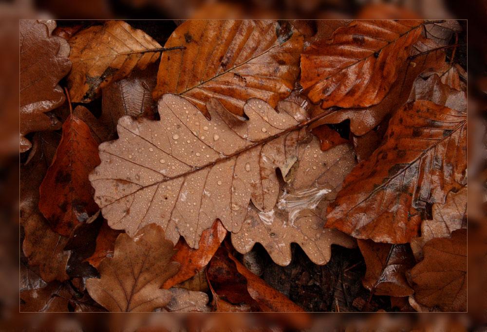 Herbstmosaik (1)