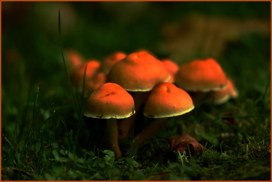 Herbstmützchen*