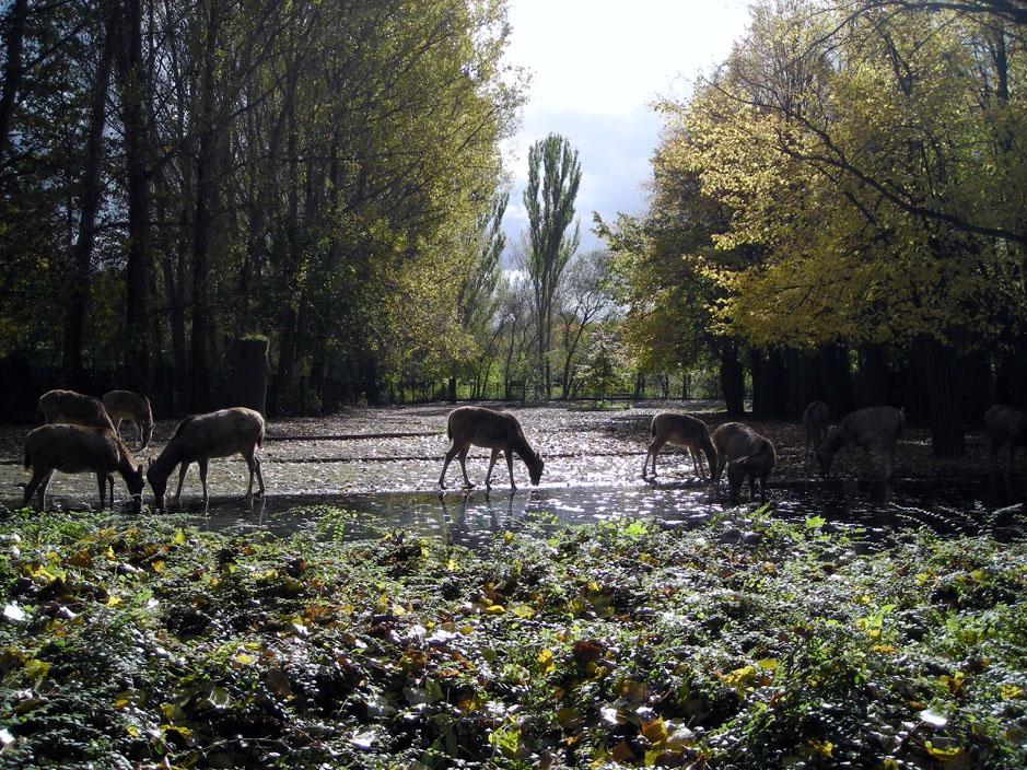 Herbstnachmittag im Berliner Tierpark