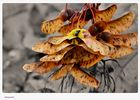 Herbstnasen...