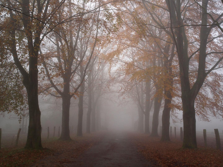 Herbstnebel ~