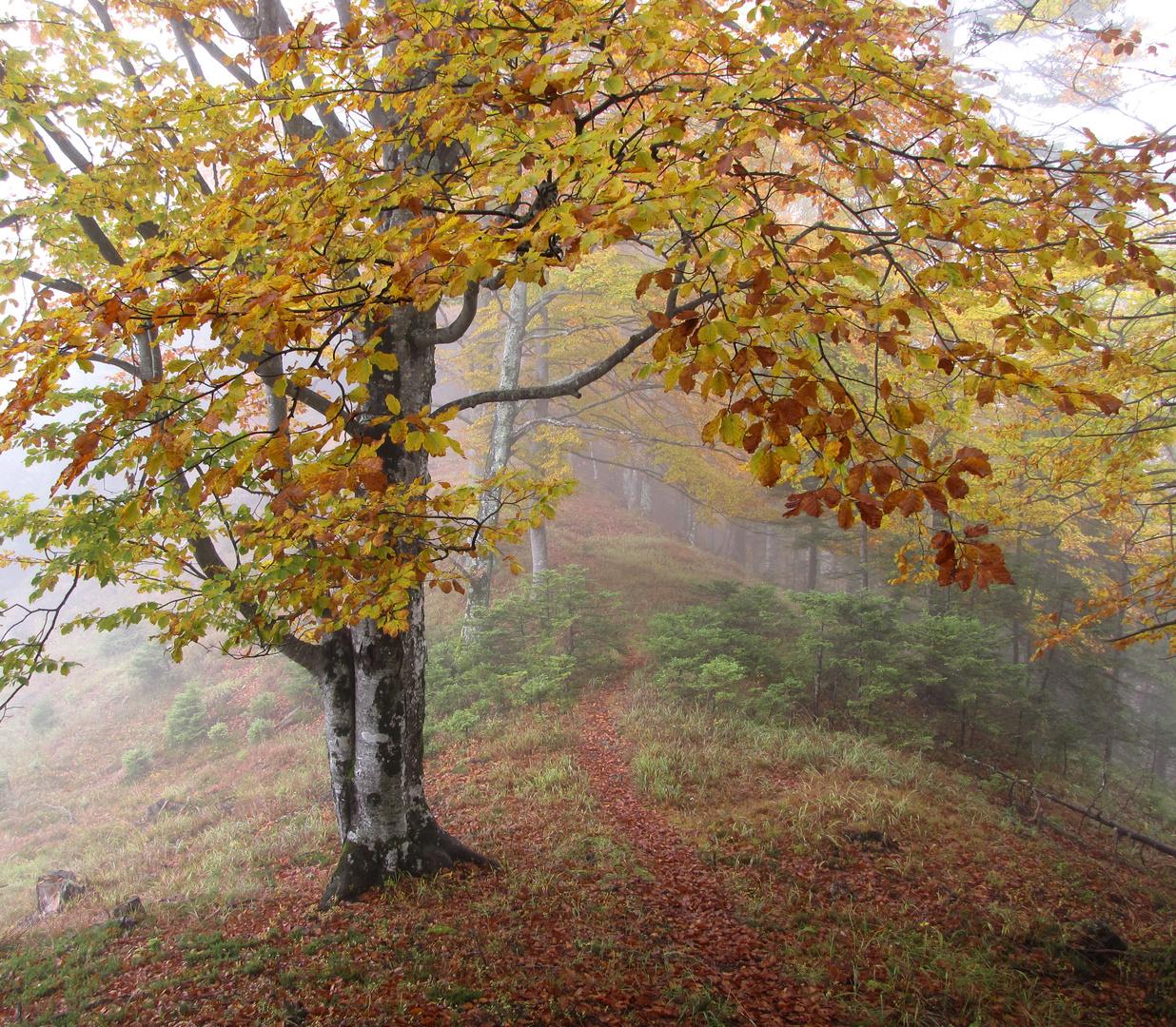Herbstnebel