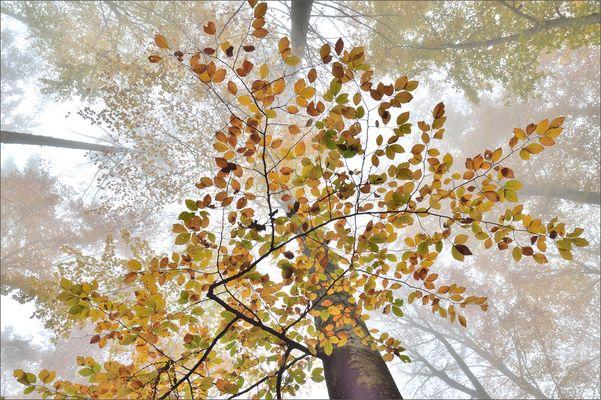 - Herbstnebel -