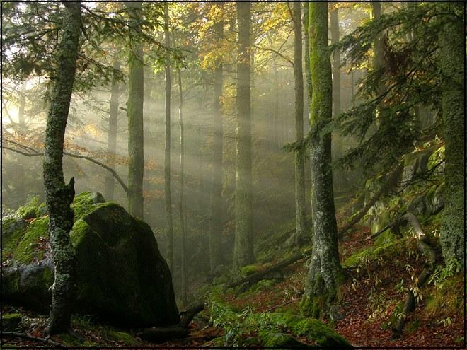 Herbstnebel im Wald