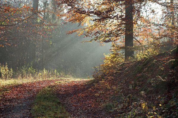Herbstnebel in Waldhessen