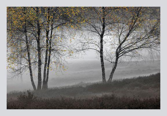 Herbstnebelbirken I