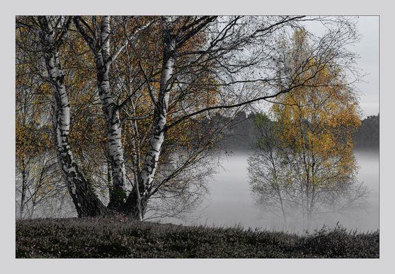 Herbstnebelbirken II
