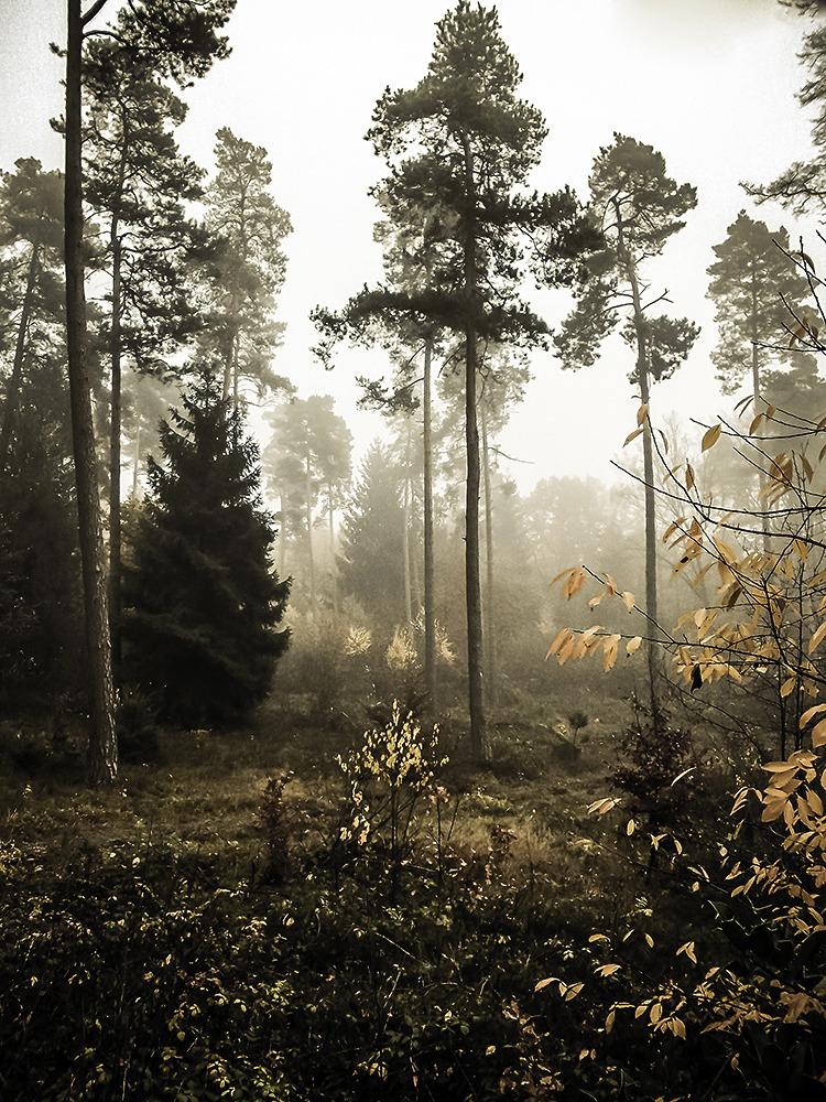Herbstnebelwald