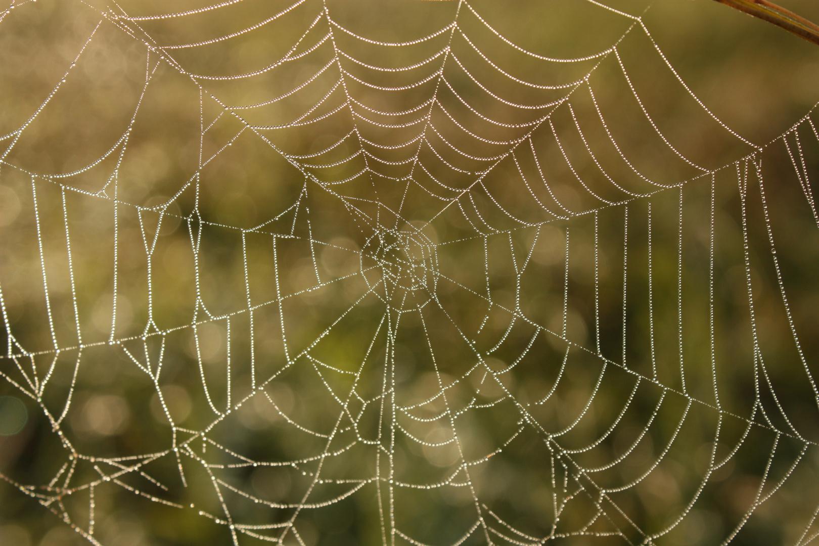 Herbstnetz