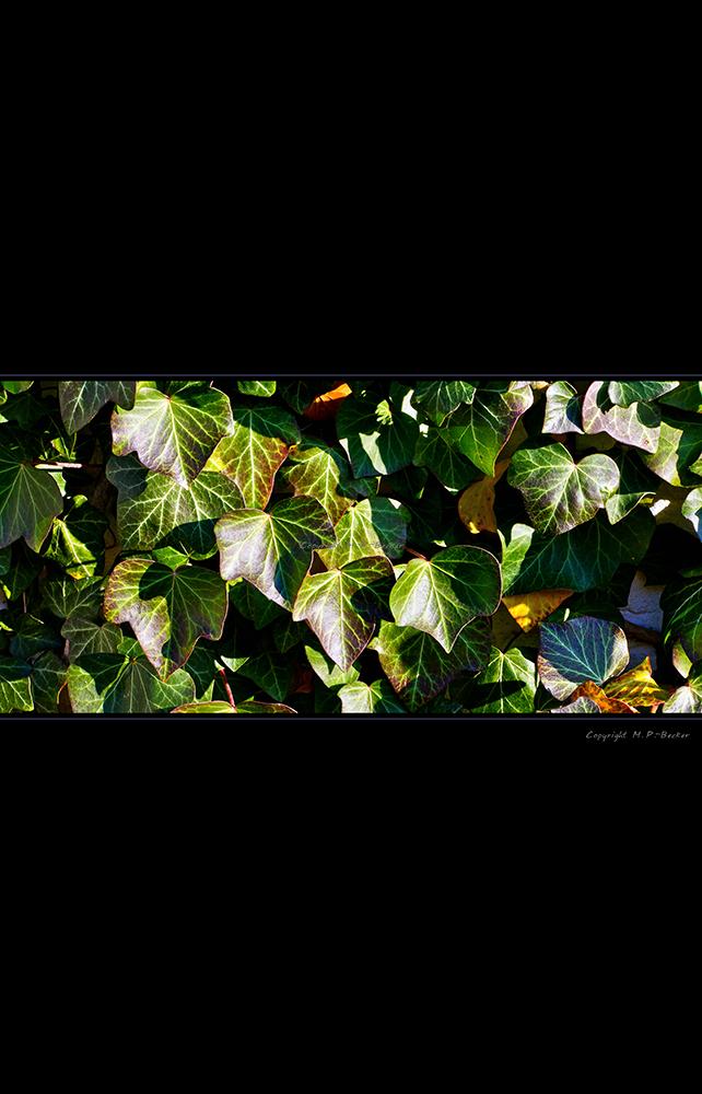 Herbstnuancen