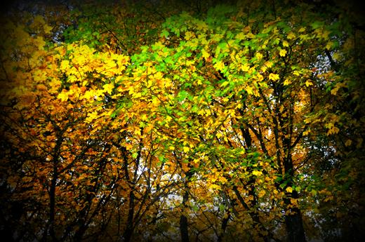 Herbstpalette