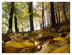 Herbstpfad