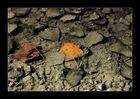 Herbstpfütze