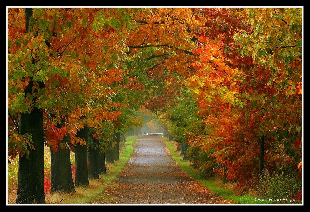 Herbstpracht....