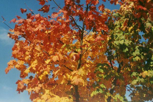 Herbstprinzessin