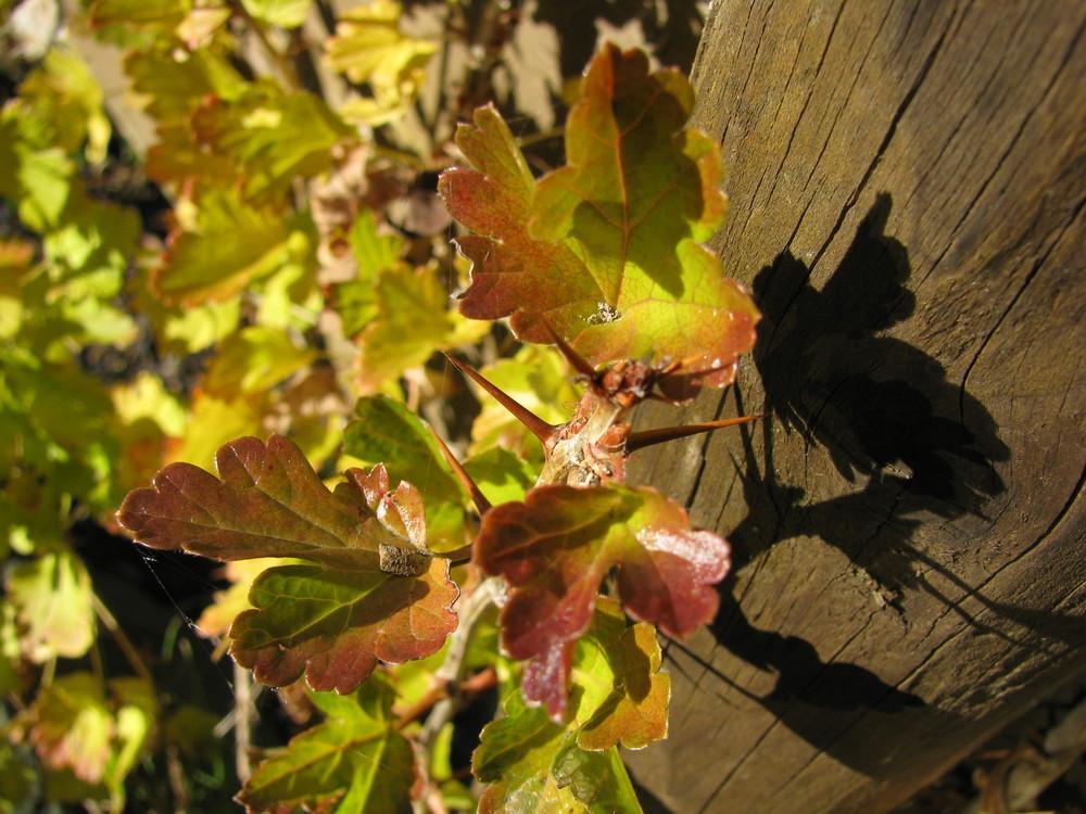 Herbstranke