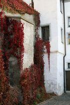 Herbstranken