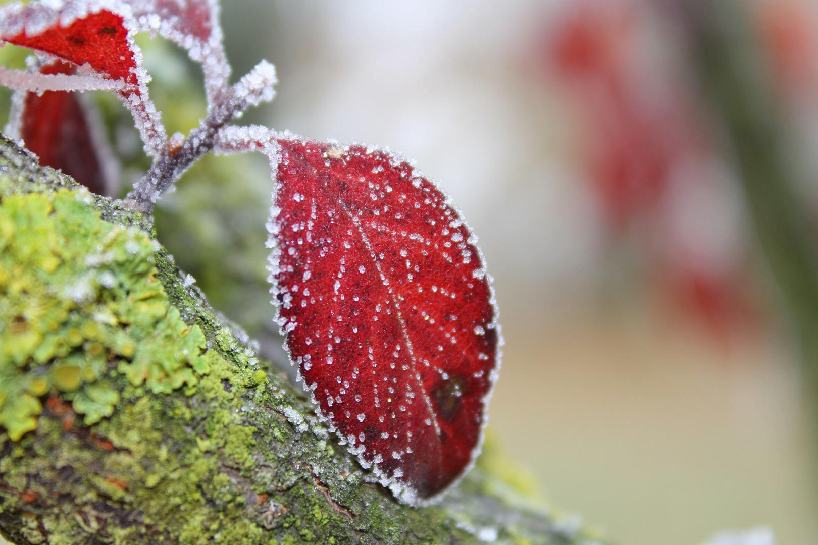 Herbstreif